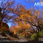 Arizona unplugged para conectarte en verdad