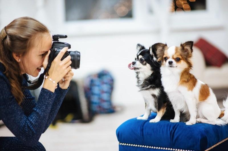 fotos de mascotas con canon