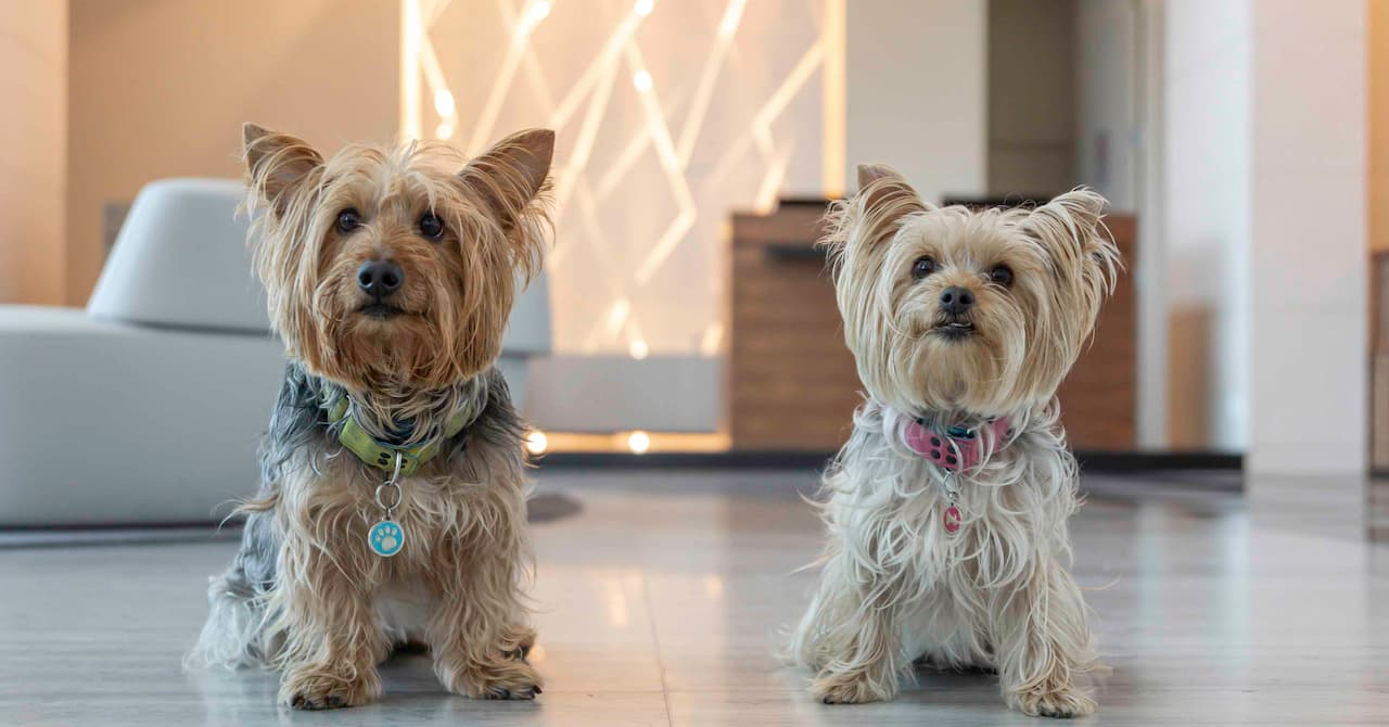 Hotel Pet friendly Sofitel Mexico City